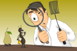 dsfdsfsdsa 310x205 - شركة مكافحة حشرات بالرياض 0594261363