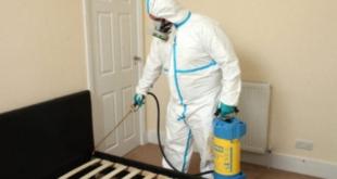 تنظيف منازل من الحشرات بالرياض شركة الرائد 310x165 - شركة رش مبيدات بالرياض 0594261363