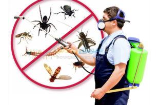 10395 1 310x205 - شركة رش مبيدات بالرياض 0594261363