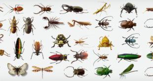 541793 orig 728x300 310x165 - افضل شركات مكافحة الحشرات بالرياض 0594261363