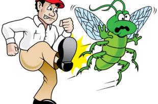 wpid pest control cartoons 811568 310x205 - افضل شركة ابادة حشرات بالرياض 0594261363