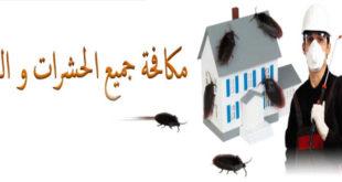 مكافحة حشرات شمال الرياض
