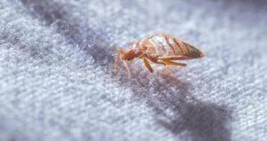 شركة مكافحة النمل الابيض بالرياض رخيصه