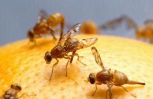 شركة مكافحة الحشرات المنزلية بالرياض